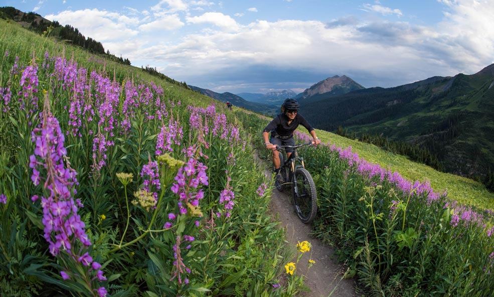 crested butte lupine trail