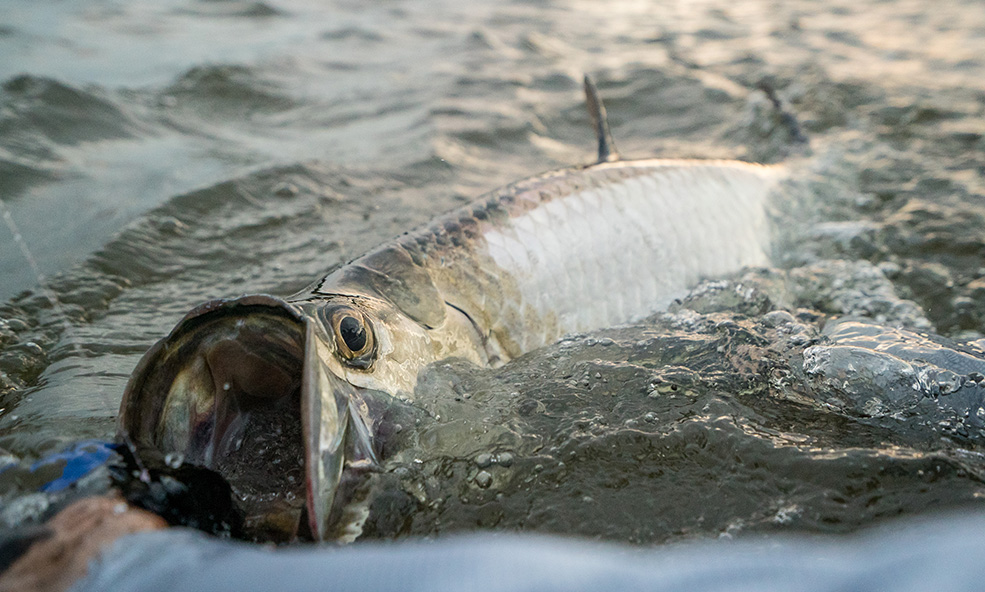 tarpon andros fishing