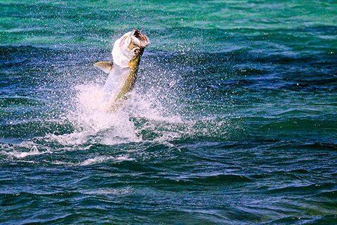 marquesas keys luxury tarpon bone fishing yacht