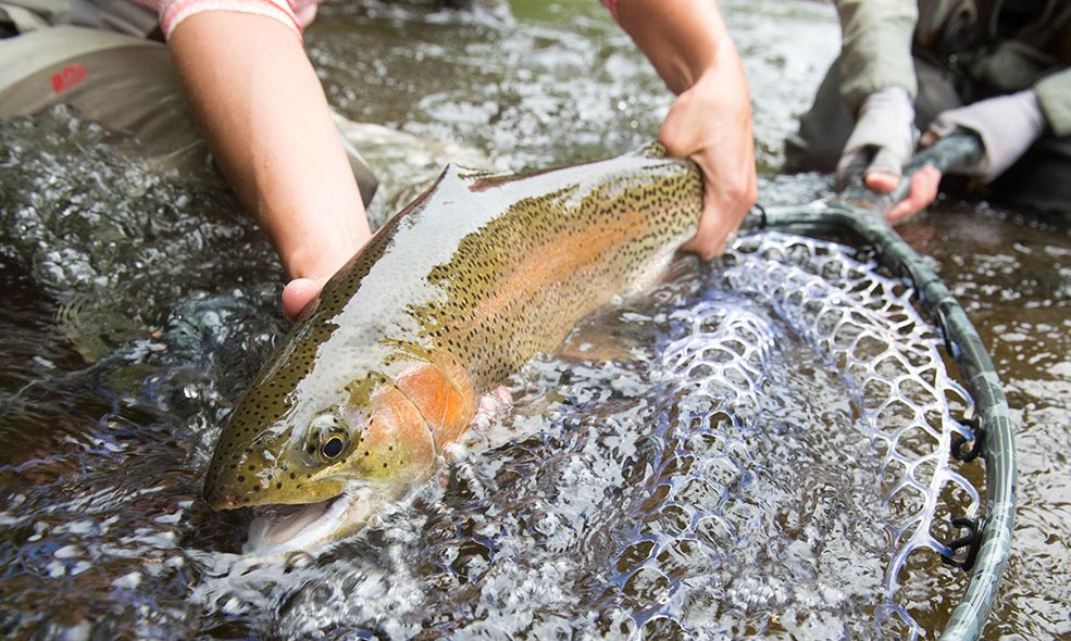 taylor river lodge fly fishing colorado rainbow trout