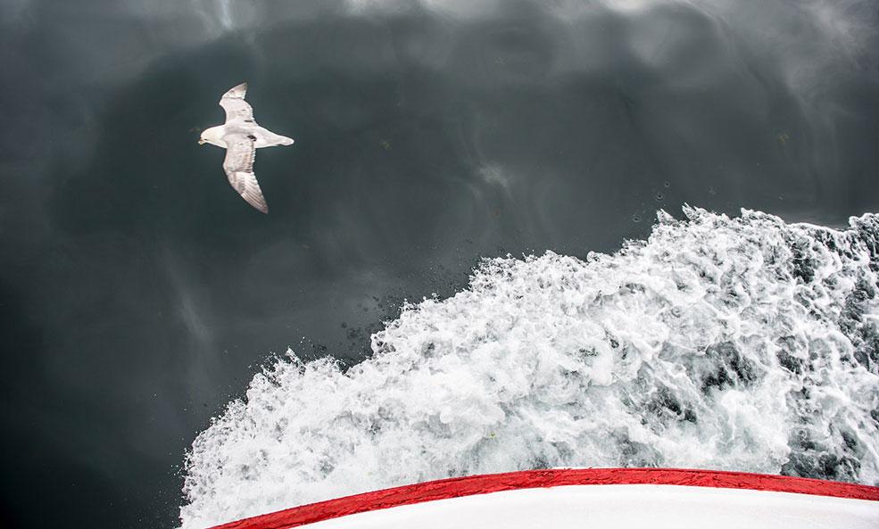 bird over water iceland photo retreat