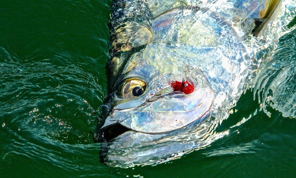 Everglades fishing