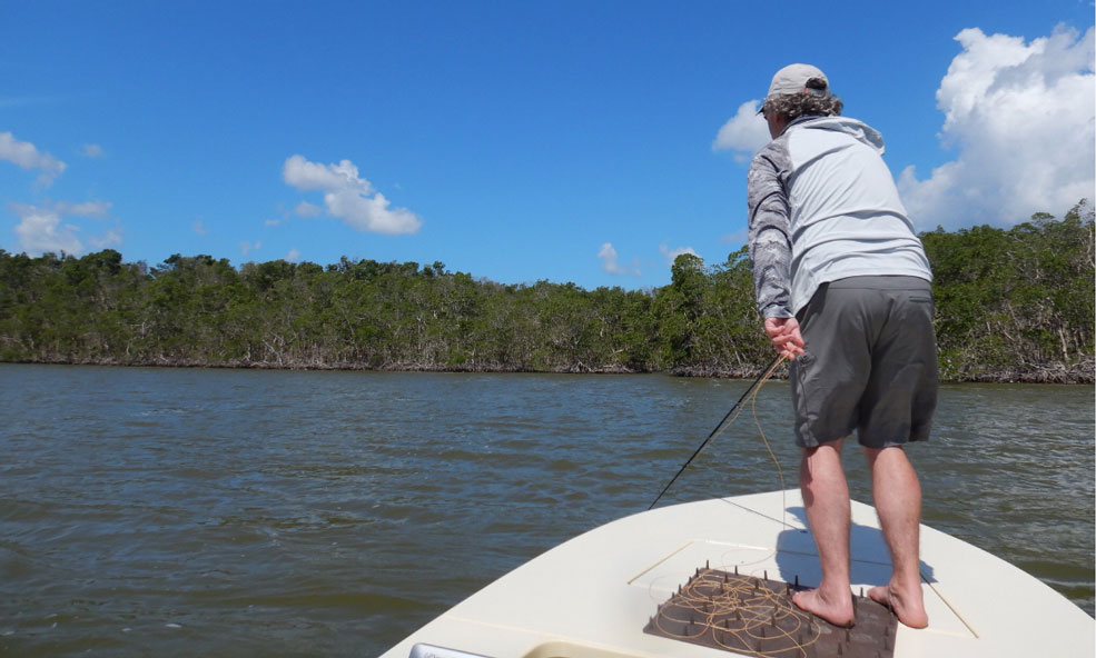 Everglades florida day trips