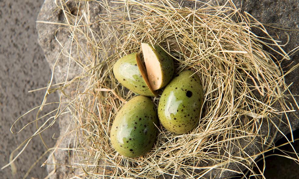 eleven life eggs