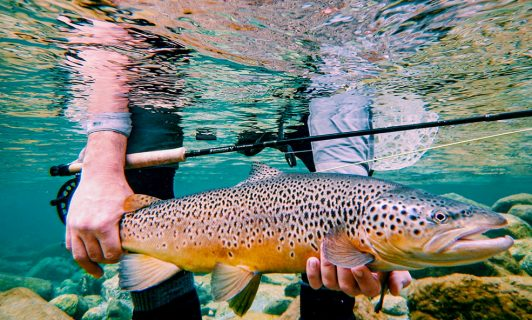 Brown trout Eleven Angling New Zealand
